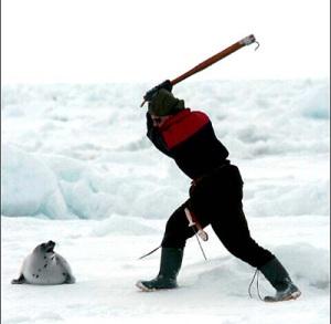 baby seal killer